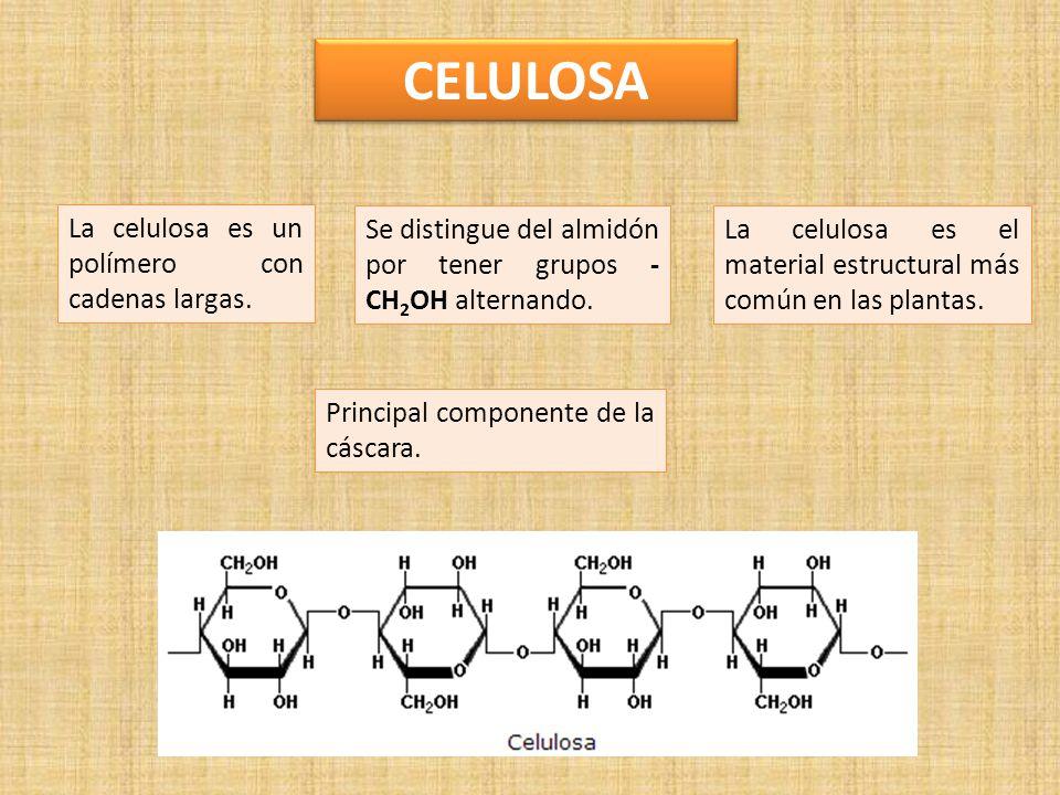 CELULOSA La celulosa es un polímero con cadenas largas.