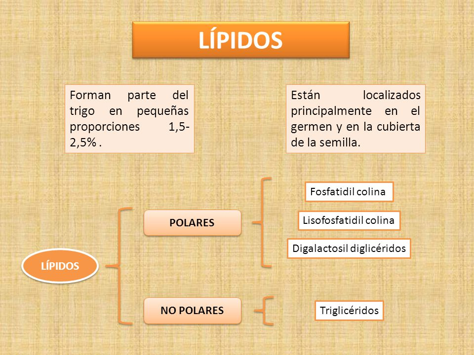 LÍPIDOS Forman parte del trigo en pequeñas proporciones 1,5-2,5% .