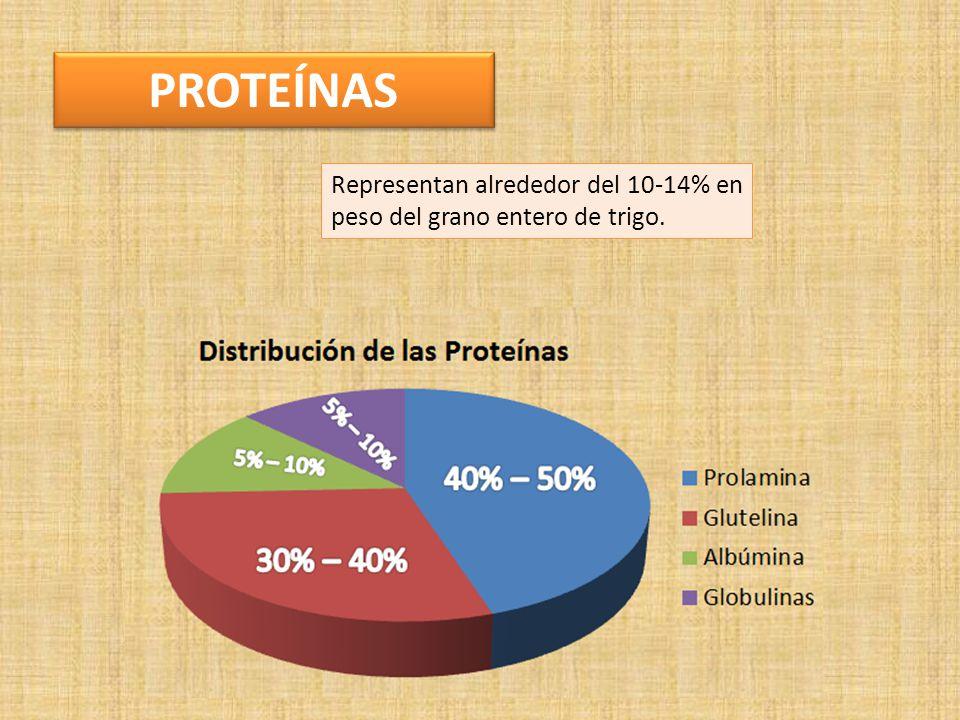 PROTEÍNAS Representan alrededor del 10-14% en peso del grano entero de trigo.