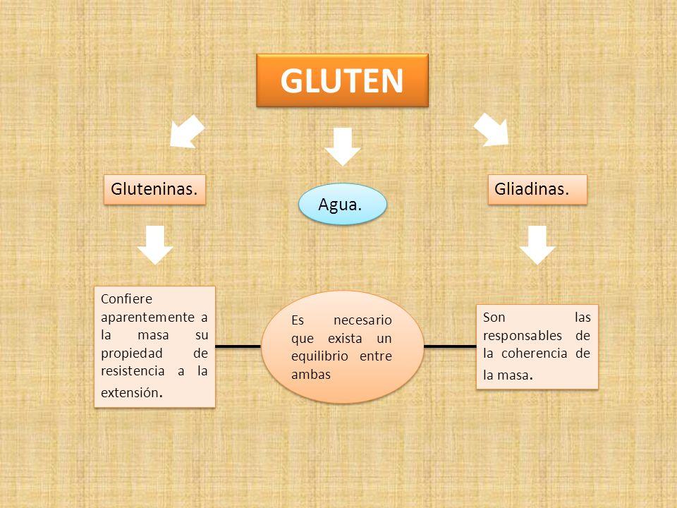 GLUTEN Gluteninas. Gliadinas. Agua.