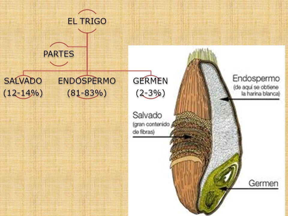 EL TRIGO PARTES SALVADO (12-14%) ENDOSPERMO (81-83%) GERMEN (2-3%)