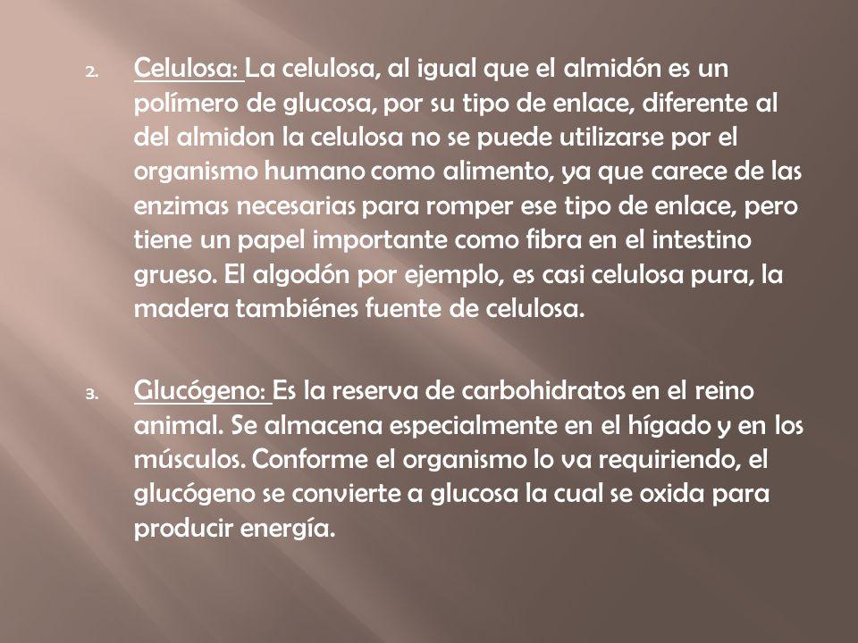 Celulosa: La celulosa, al igual que el almidón es un polímero de glucosa, por su tipo de enlace, diferente al del almidon la celulosa no se puede utilizarse por el organismo humano como alimento, ya que carece de las enzimas necesarias para romper ese tipo de enlace, pero tiene un papel importante como fibra en el intestino grueso. El algodón por ejemplo, es casi celulosa pura, la madera tambiénes fuente de celulosa.