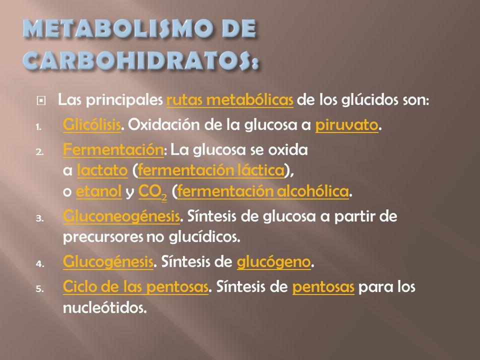 METABOLISMO DE CARBOHIDRATOS: