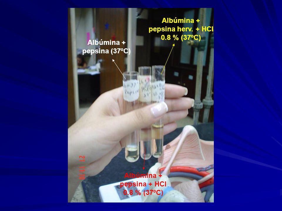Albúmina + pepsina herv. + HCl 0.8 % (37ºC)