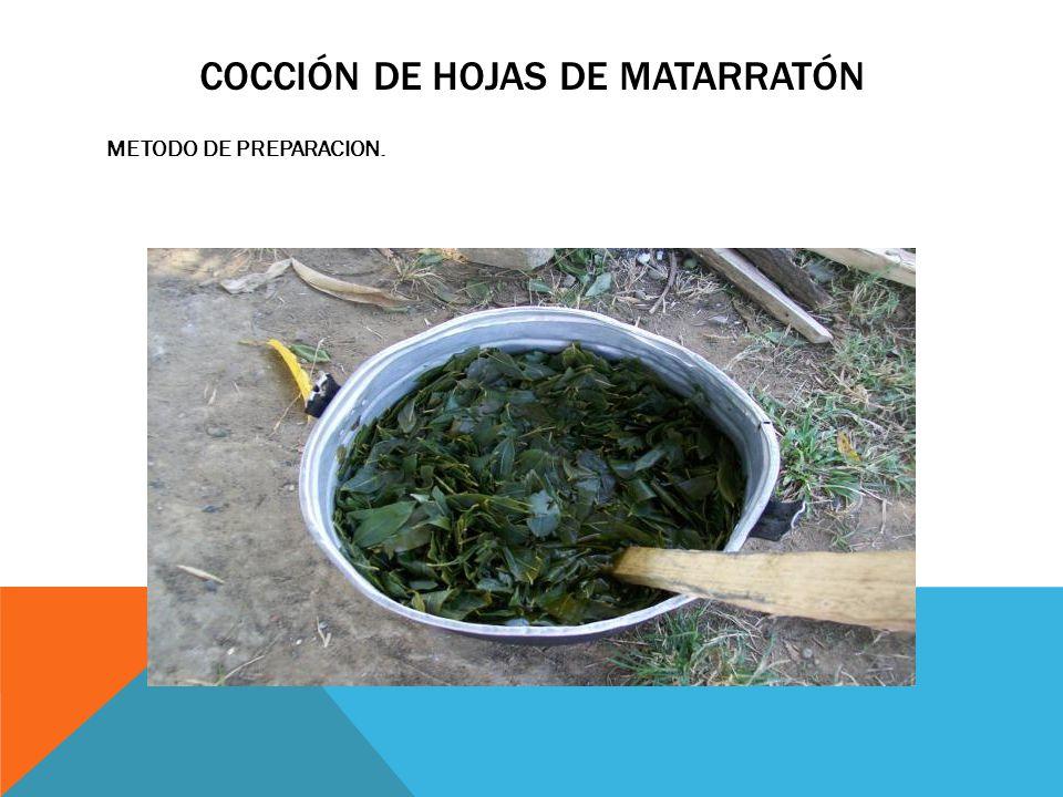 Cocción de hojas de matarratón