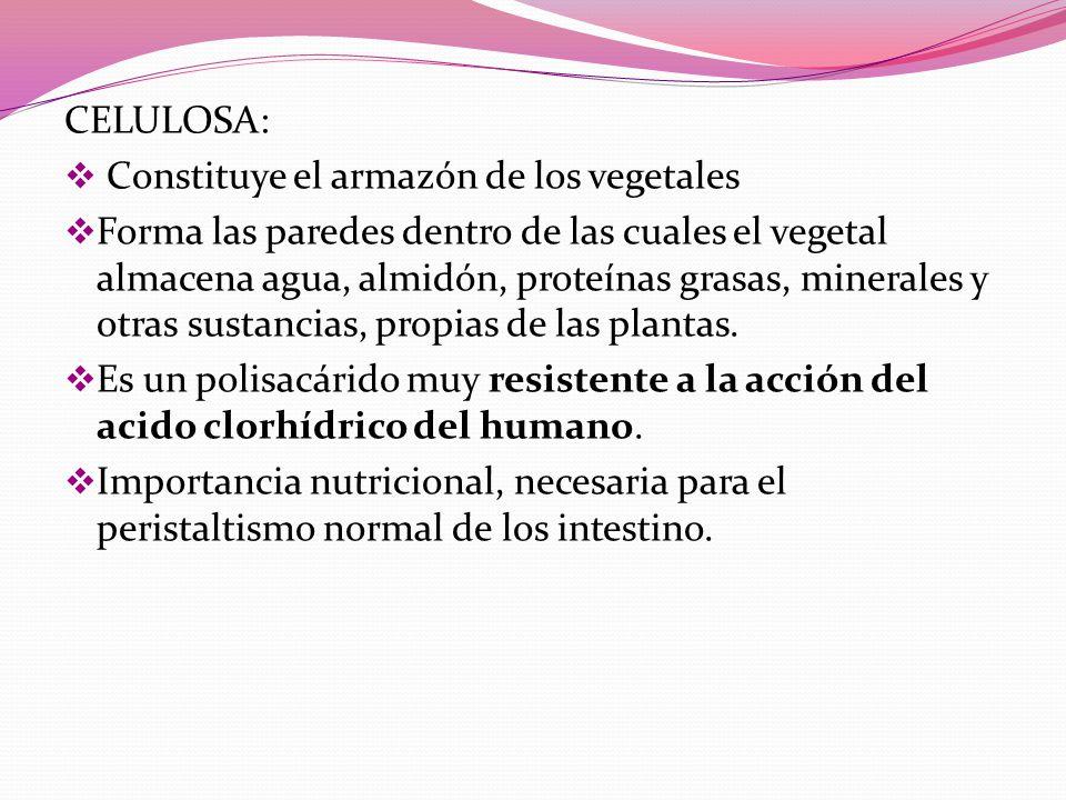 CELULOSA: Constituye el armazón de los vegetales.