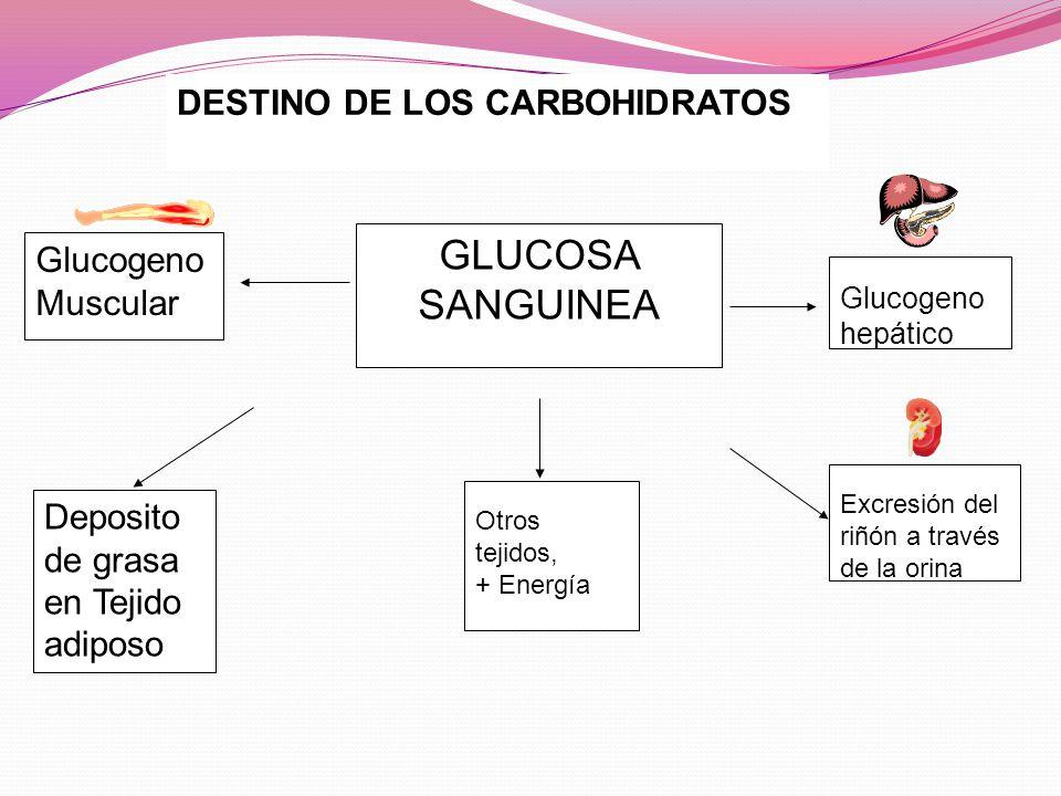 GLUCOSA SANGUINEA DESTINO DE LOS CARBOHIDRATOS Glucogeno Muscular