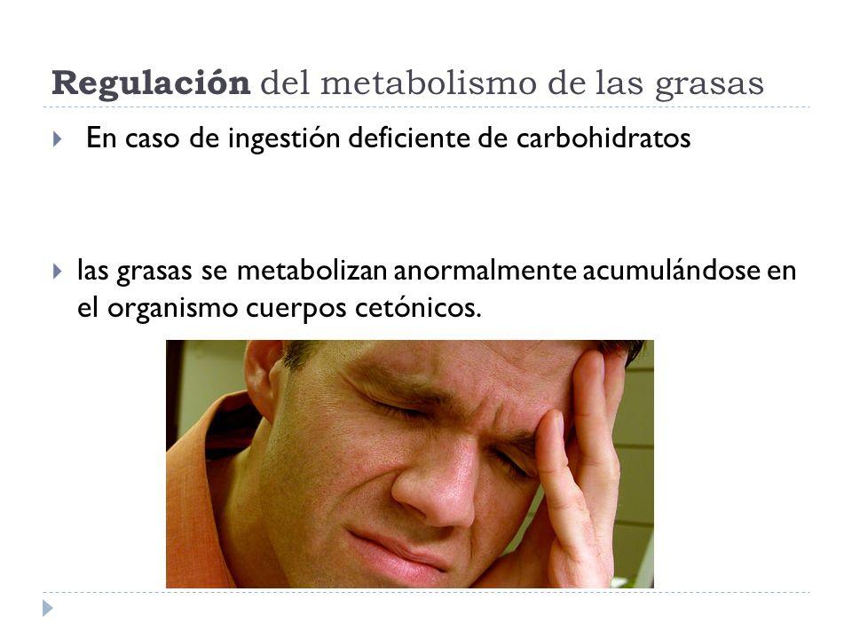 Regulación del metabolismo de las grasas