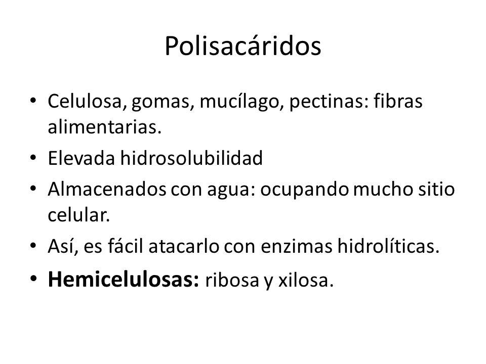 Polisacáridos Hemicelulosas: ribosa y xilosa.