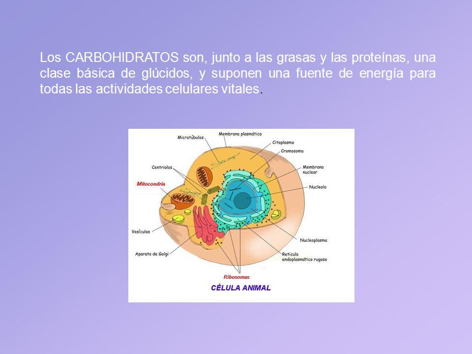 Los CARBOHIDRATOS son, junto a las grasas y las proteínas, una clase básica de glúcidos, y suponen una fuente de energía para todas las actividades celulares vitales.