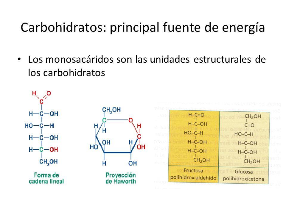Carbohidratos: principal fuente de energía