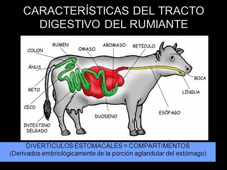 CARACTERÍSTICAS DEL TRACTO DIGESTIVO DEL RUMIANTE