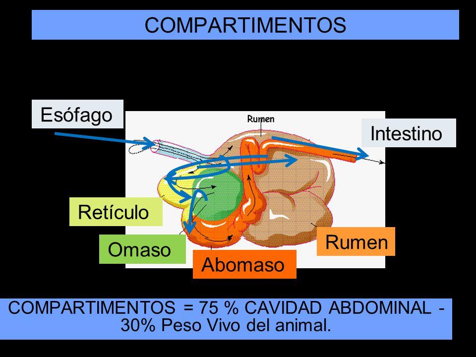 COMPARTIMENTOS = 75 % CAVIDAD ABDOMINAL - 30% Peso Vivo del animal.