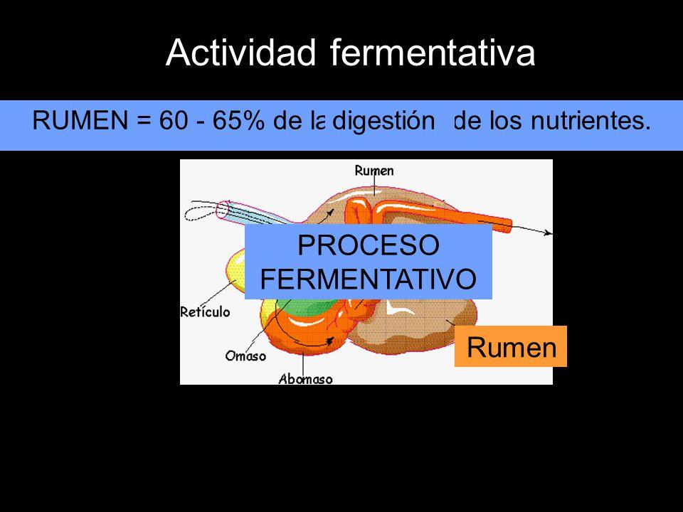 RUMEN = 60 - 65% de la digestión de los nutrientes.