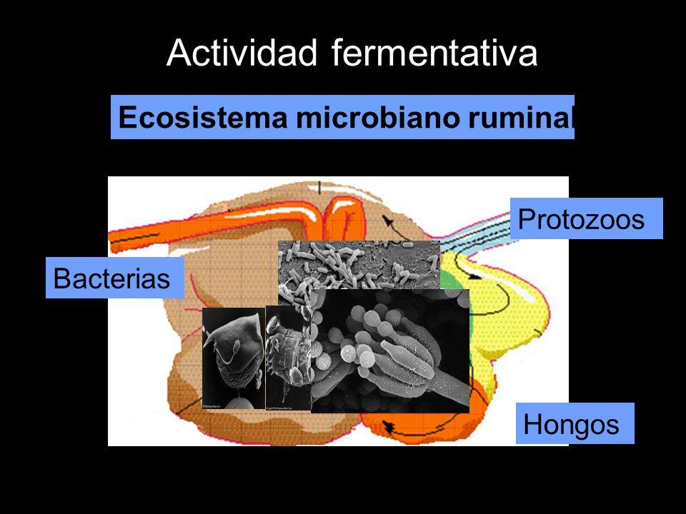 Actividad fermentativa