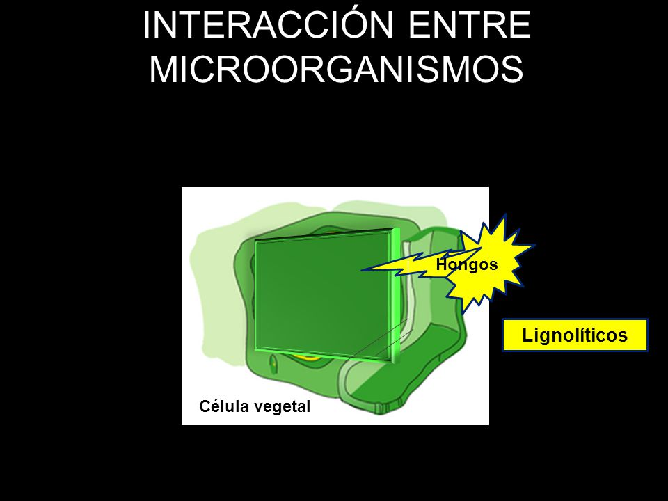 INTERACCIÓN ENTRE MICROORGANISMOS