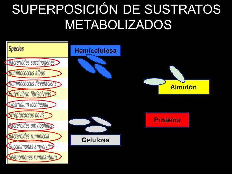 SUPERPOSICIÓN DE SUSTRATOS