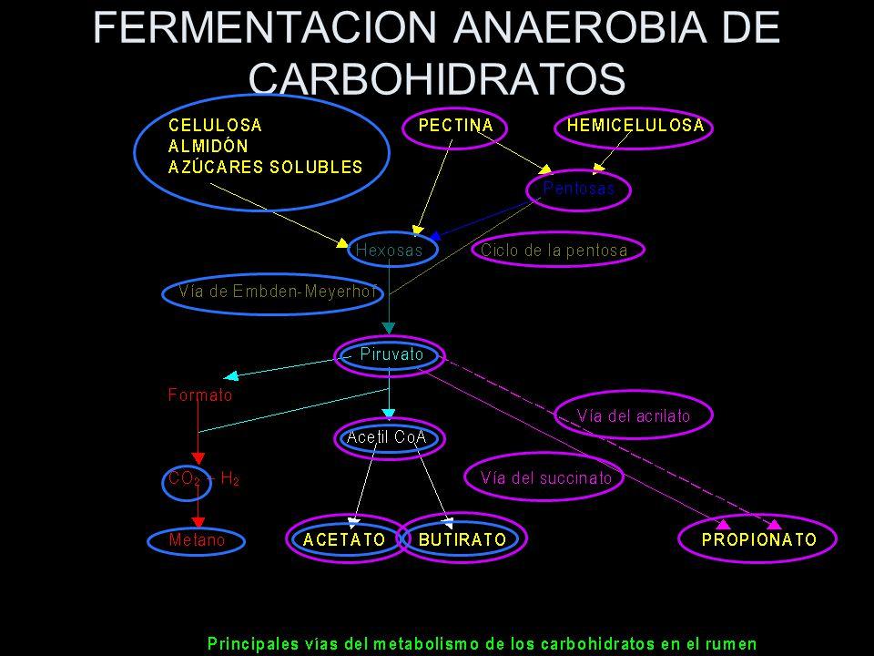 FERMENTACION ANAEROBIA DE CARBOHIDRATOS