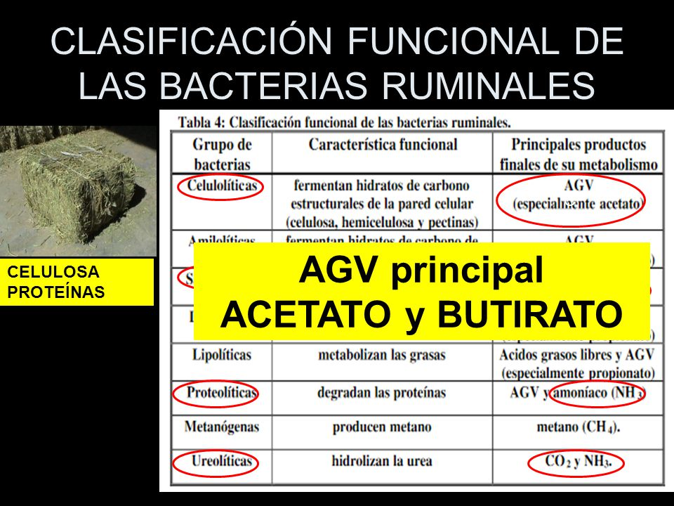 CLASIFICACIÓN FUNCIONAL DE LAS BACTERIAS RUMINALES