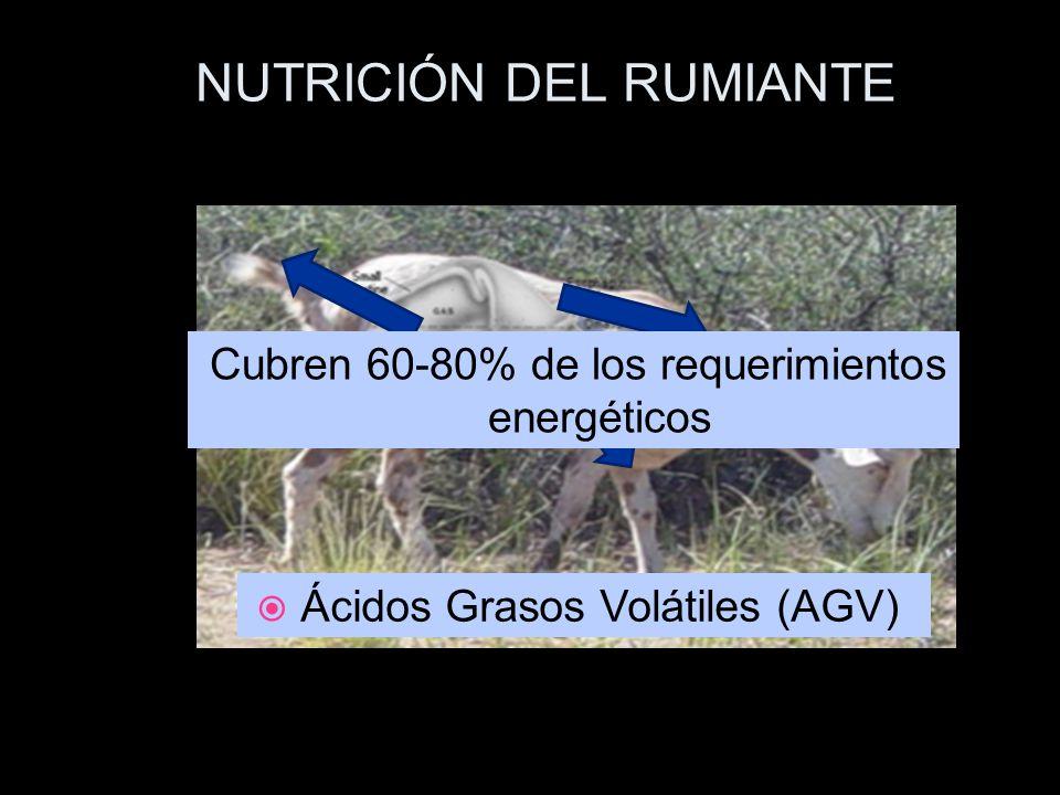 NUTRICIÓN DEL RUMIANTE