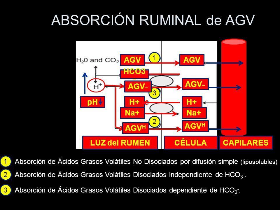 ABSORCIÓN RUMINAL de AGV