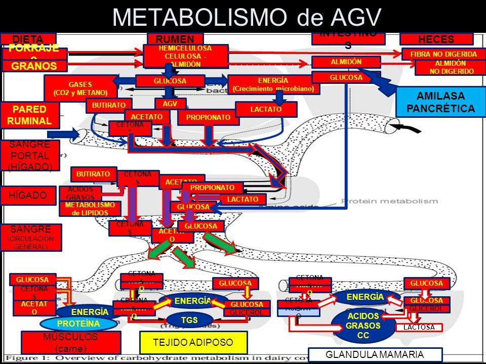 (Crecimiento microbiano) METABOLISMO de LIPIDOS