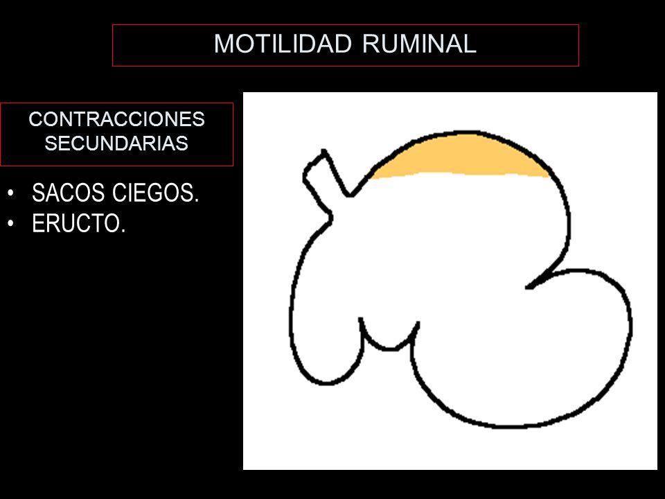 MOTILIDAD RUMINAL CONTRACCIONES SECUNDARIAS SACOS CIEGOS. ERUCTO.