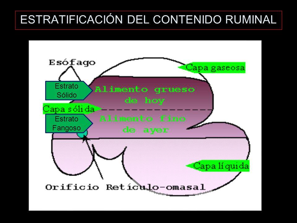 ESTRATIFICACIÓN DEL CONTENIDO RUMINAL