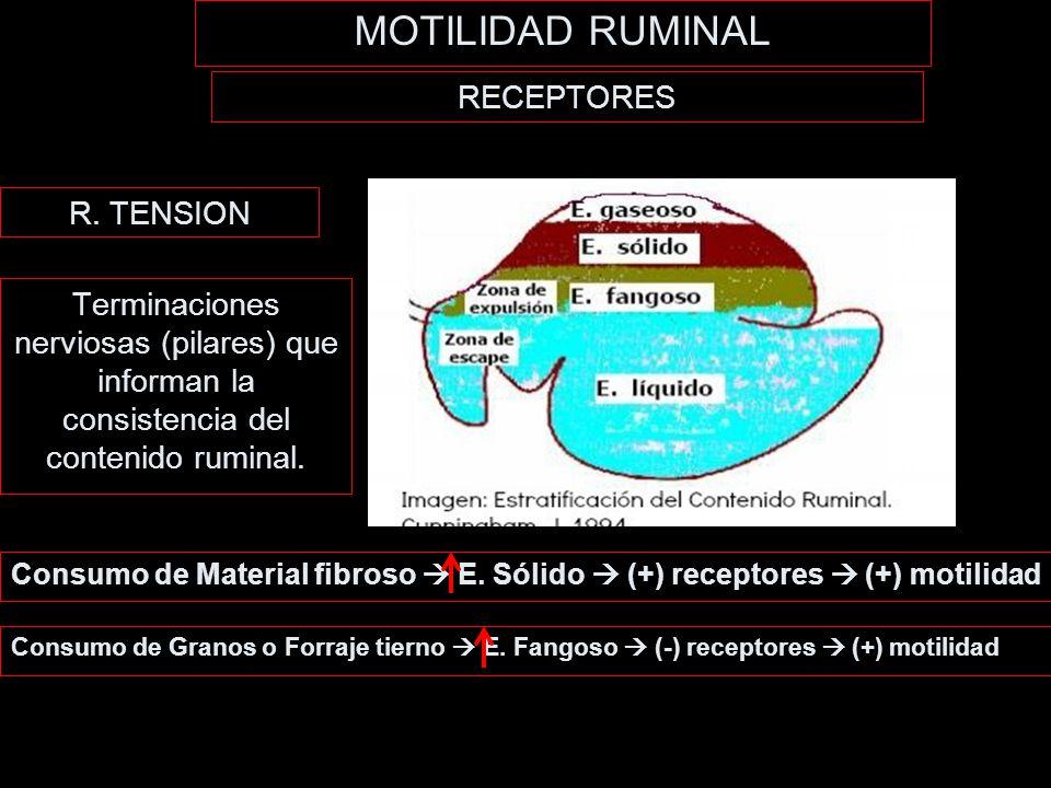 MOTILIDAD RUMINAL RECEPTORES R. TENSION