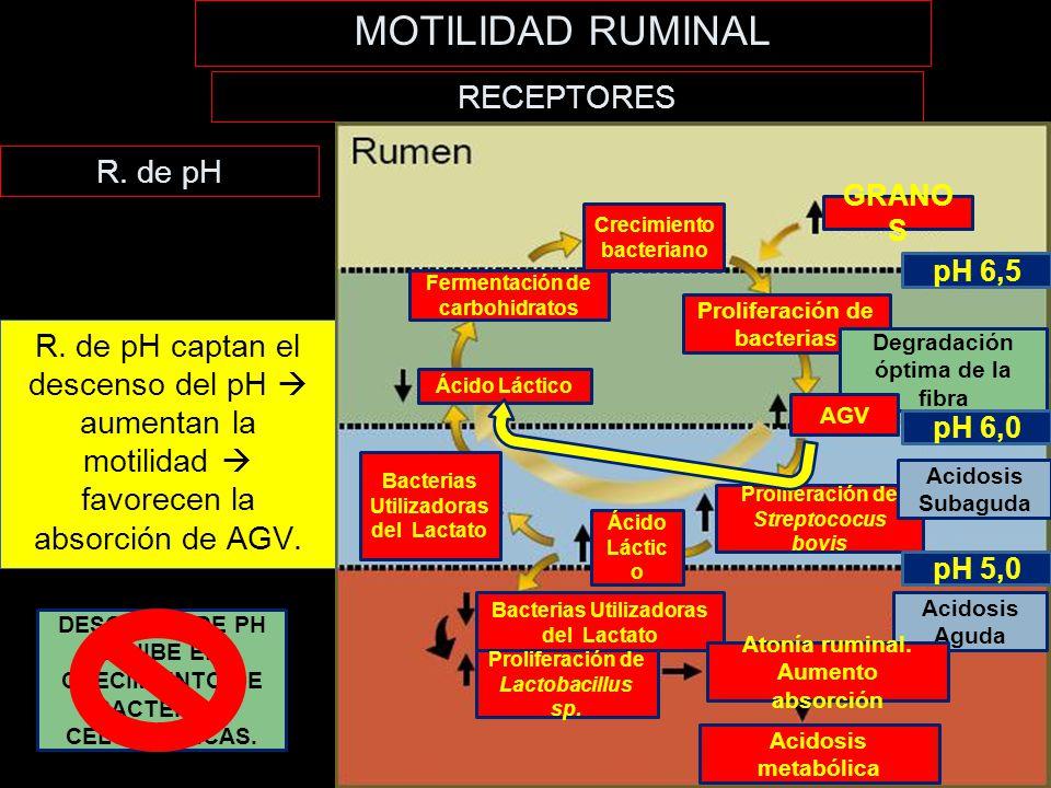 MOTILIDAD RUMINAL RECEPTORES R. de pH