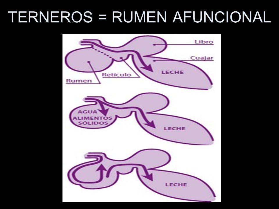 TERNEROS = RUMEN AFUNCIONAL