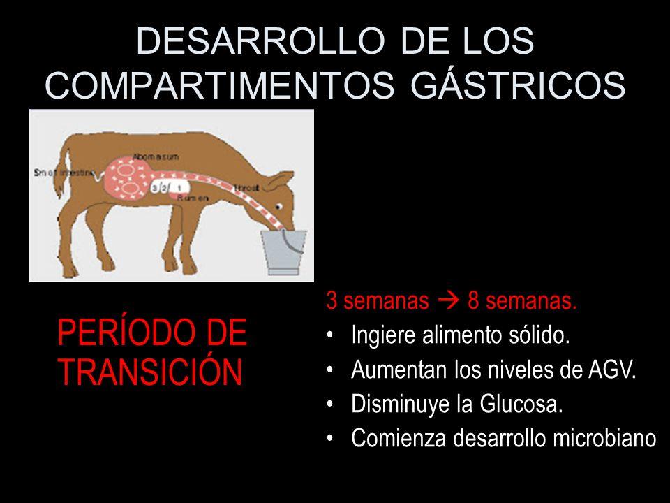 DESARROLLO DE LOS COMPARTIMENTOS GÁSTRICOS