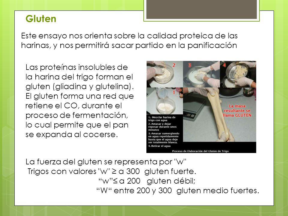 Gluten Este ensayo nos orienta sobre la calidad proteica de las harinas, y nos permitirá sacar partido en la panificación.