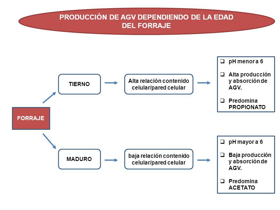 PRODUCCIÓN DE AGV DEPENDIENDO DE LA EDAD DEL FORRAJE