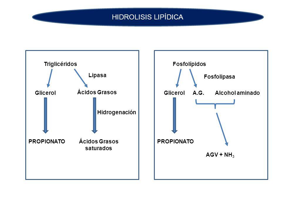 HIDROLISIS LIPÍDICA Triglicéridos Glicerol Ácidos Grasos PROPIONATO