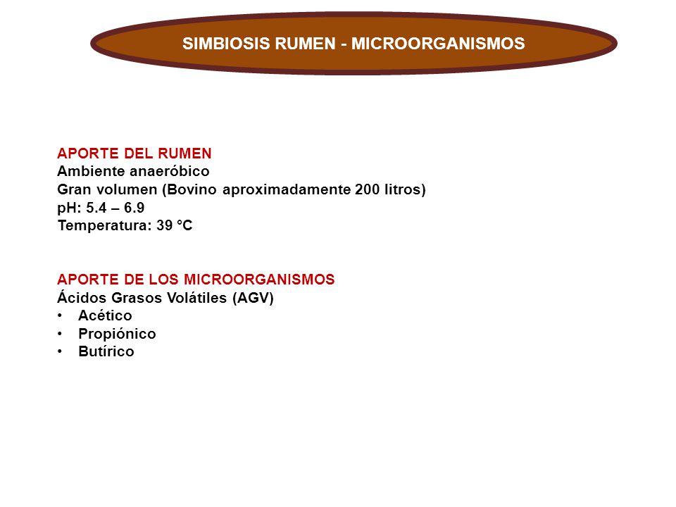 SIMBIOSIS RUMEN - MICROORGANISMOS
