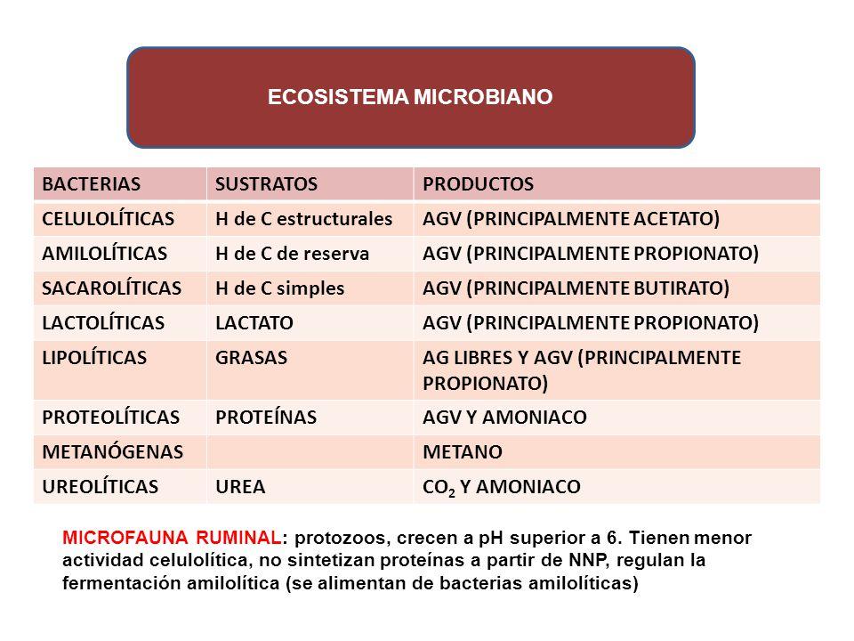 ECOSISTEMA MICROBIANO