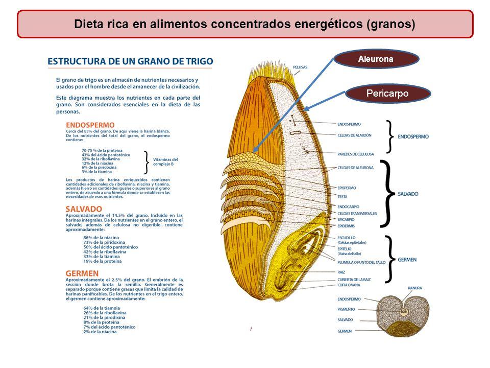 Dieta rica en alimentos concentrados energéticos (granos)