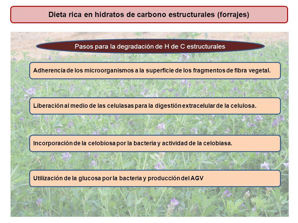 Dieta rica en hidratos de carbono estructurales (forrajes)