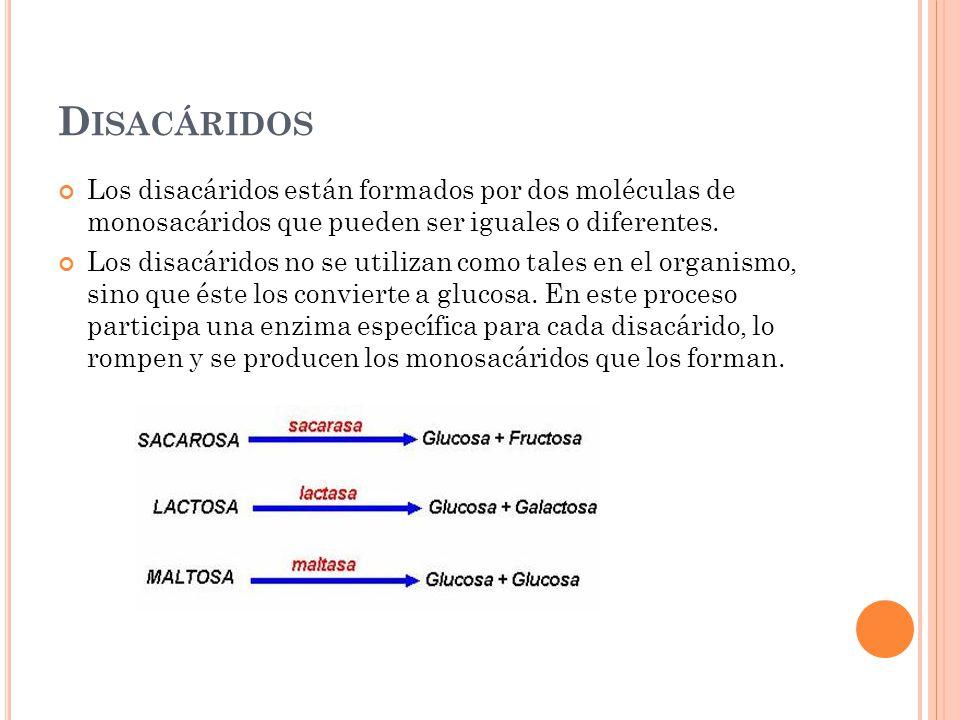 Disacáridos Los disacáridos están formados por dos moléculas de monosacáridos que pueden ser iguales o diferentes.