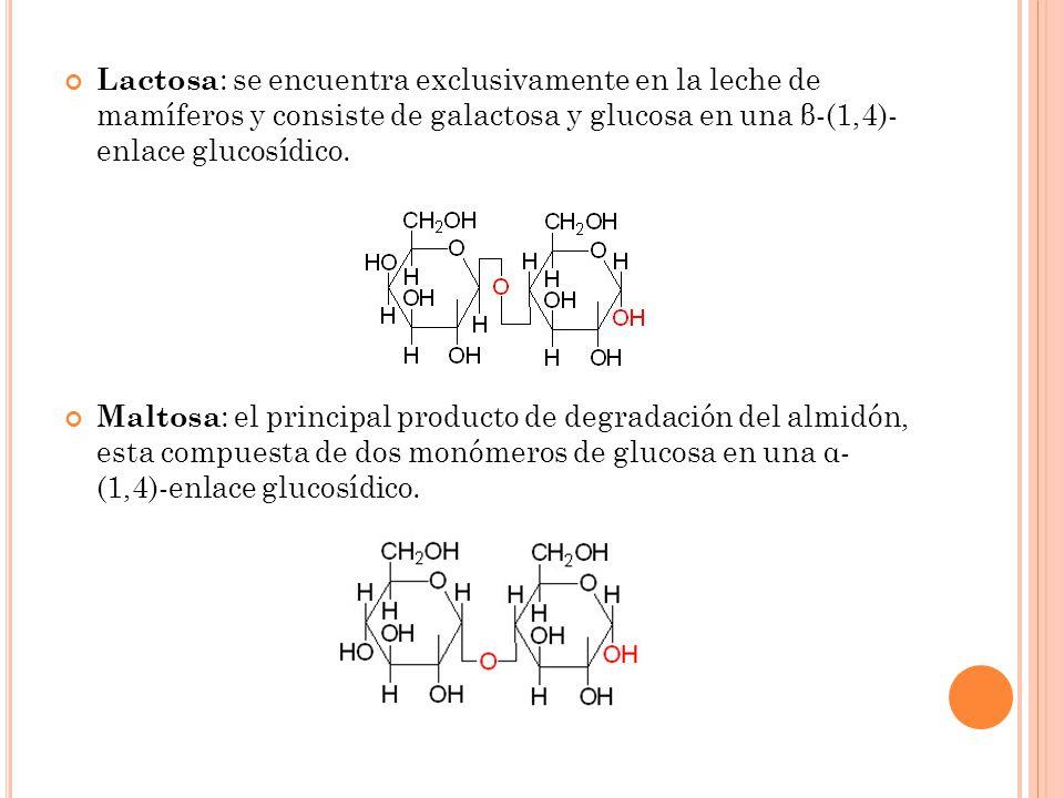 Lactosa: se encuentra exclusivamente en la leche de mamíferos y consiste de galactosa y glucosa en una β-(1,4)- enlace glucosídico.