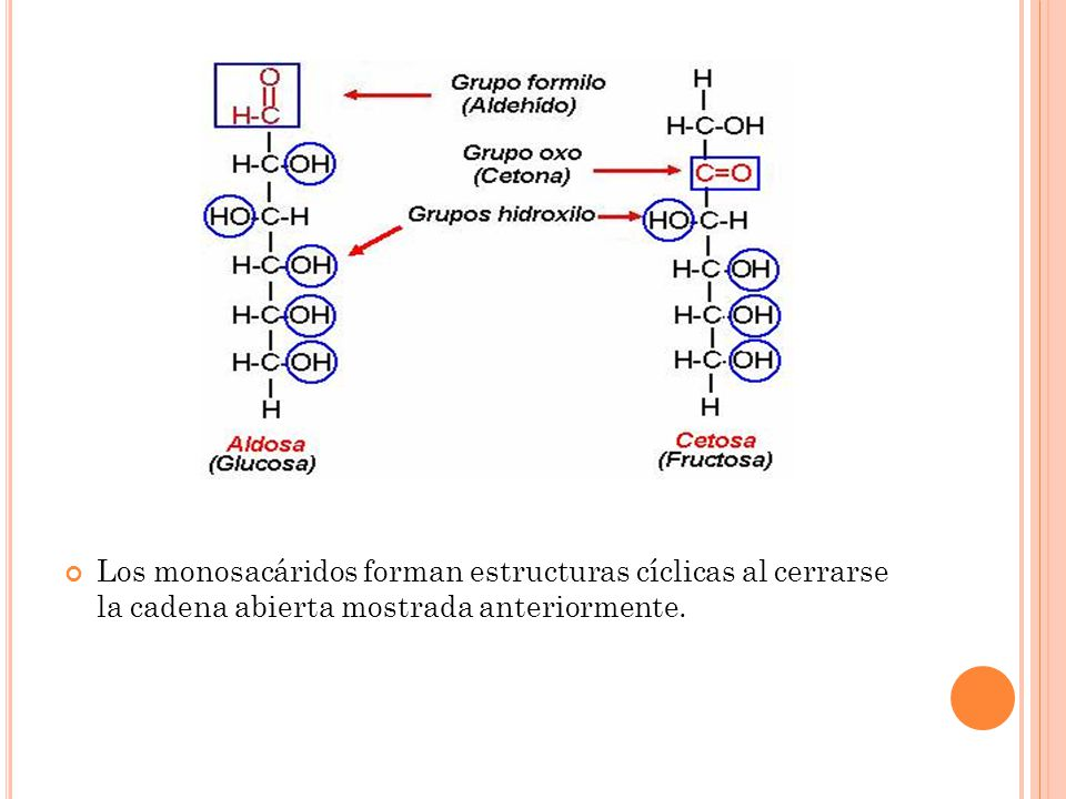 Los monosacáridos forman estructuras cíclicas al cerrarse la cadena abierta mostrada anteriormente.