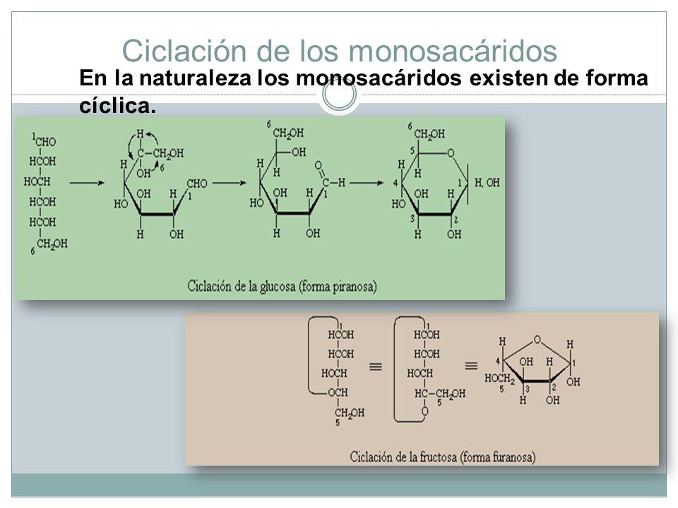 Ciclación de los monosacáridos