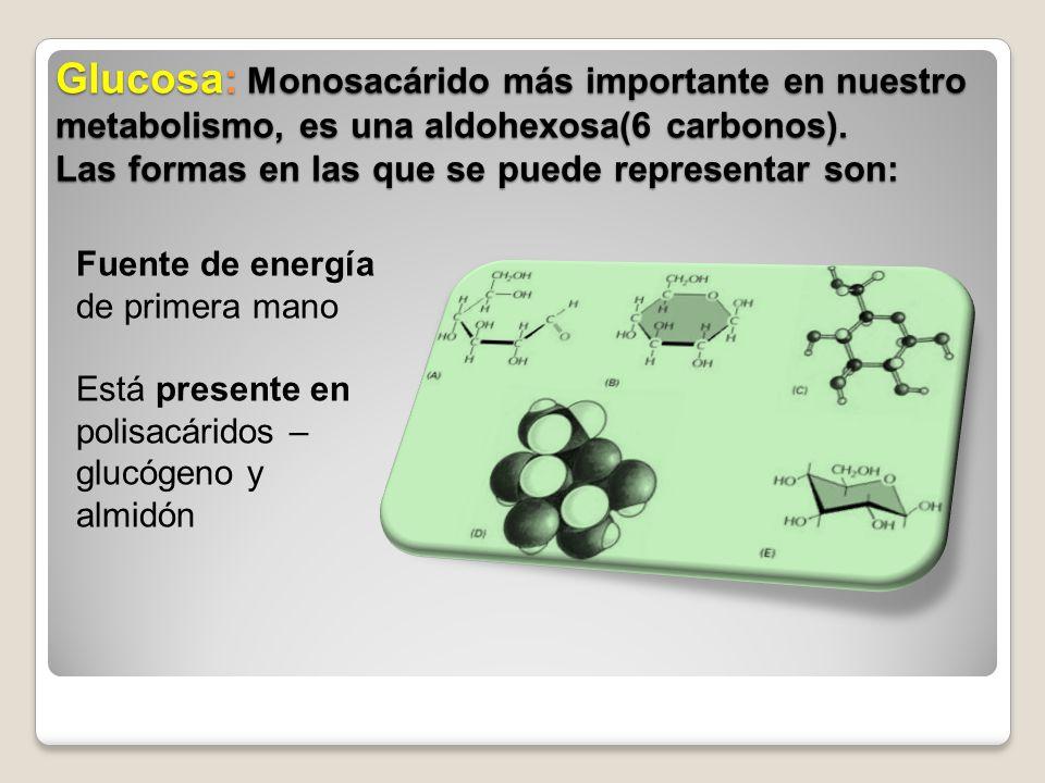 Glucosa: Monosacárido más importante en nuestro metabolismo, es una aldohexosa(6 carbonos). Las formas en las que se puede representar son: