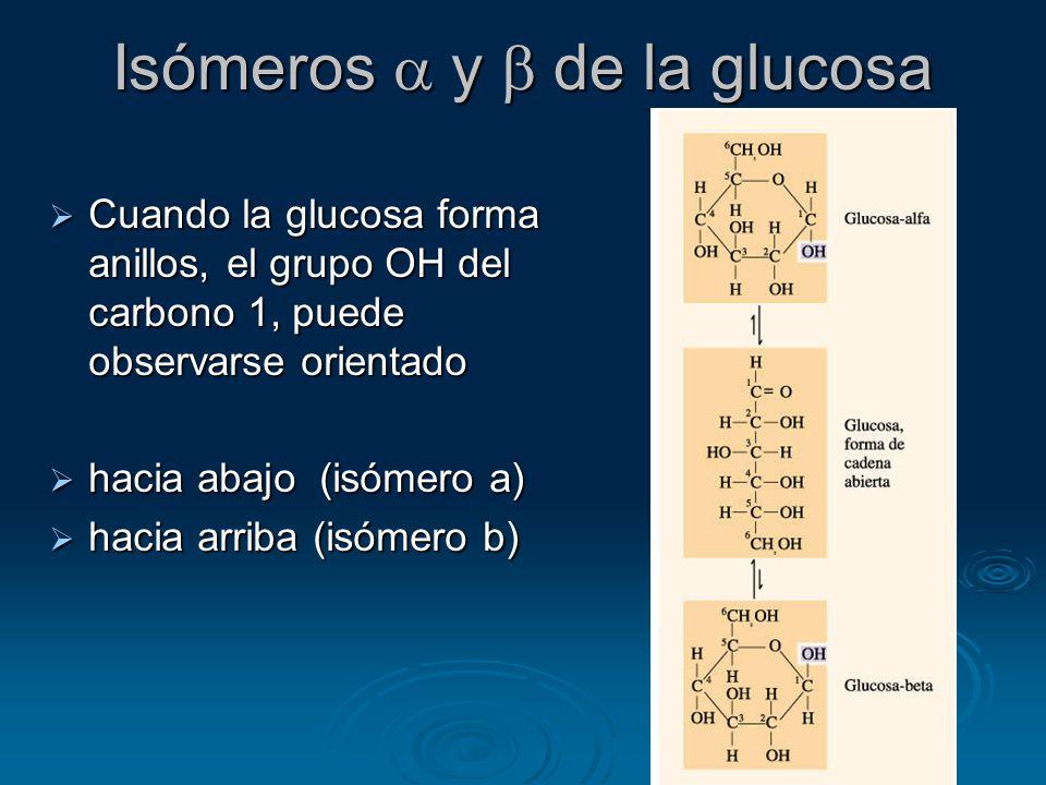Isómeros a y b de la glucosa