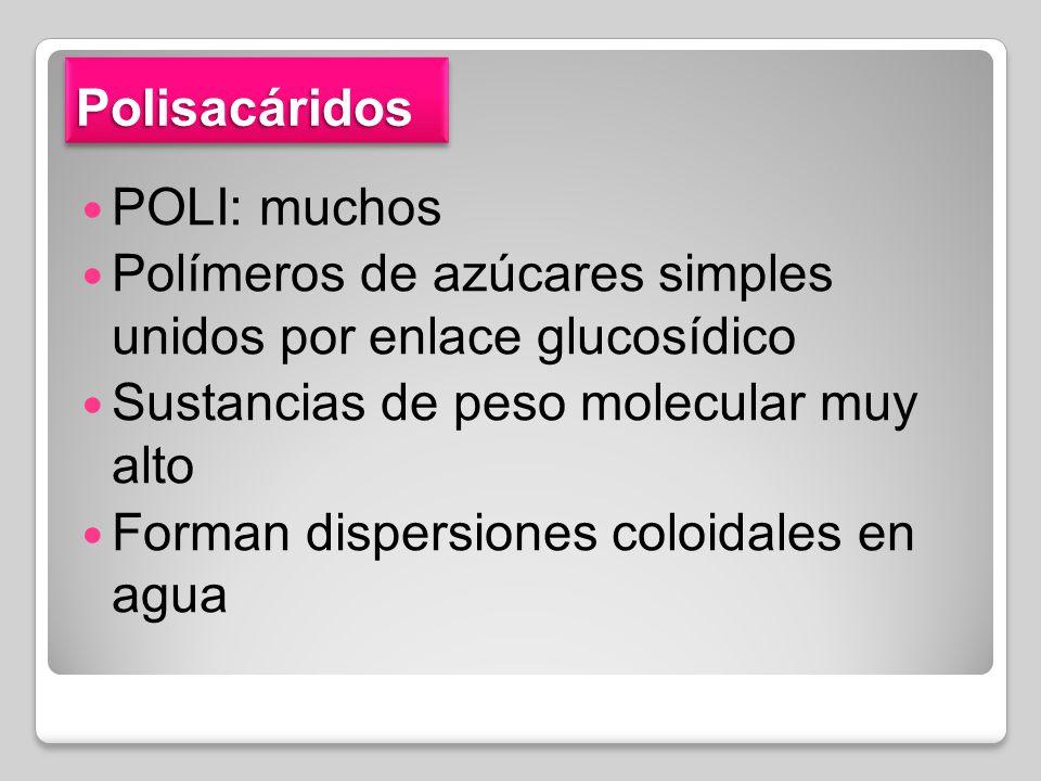 Polisacáridos POLI: muchos. Polímeros de azúcares simples unidos por enlace glucosídico. Sustancias de peso molecular muy alto.