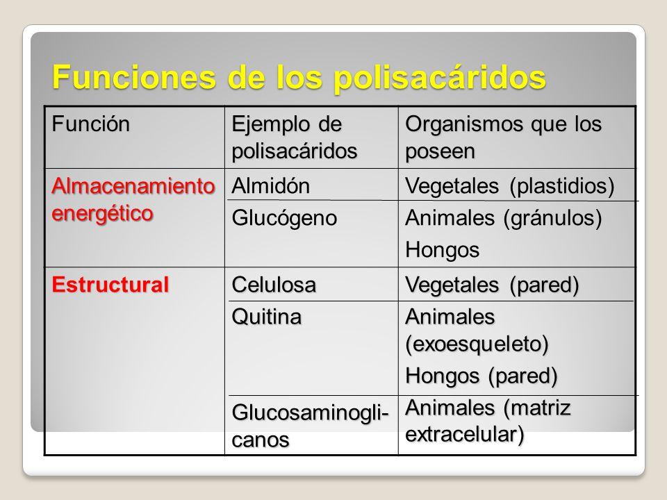 Funciones de los polisacáridos