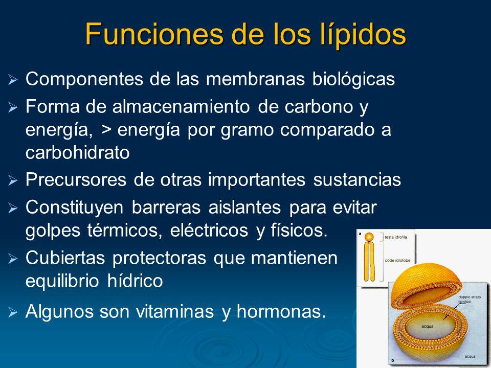 Funciones de los lípidos