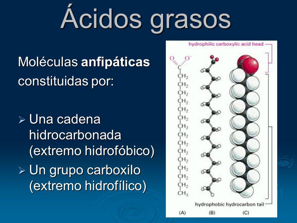 Ácidos grasos Moléculas anfipáticas constituidas por:
