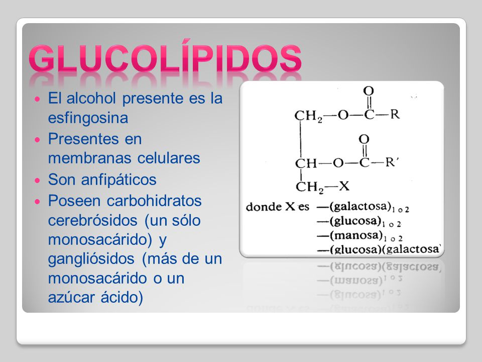 Glucolípidos El alcohol presente es la esfingosina